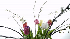 Tulip Turning Cold Light Stock Footage