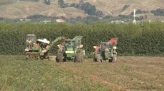 Tomato harvesting operation Stock Footage