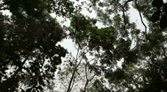 Trees of the Rain Forest Silhouetted Against the Sky Stock Footage