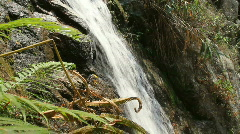 Waterfall and Ferns - stock footage