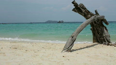 Tropical Beach Driftwood Stock Footage