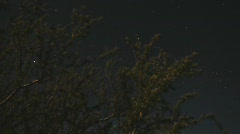 Night sky behind desert brush - 1 - still as the stars move Stock Footage
