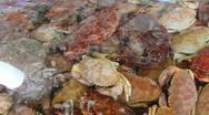 Crab Tank Stock Footage