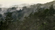 Fog moving over tropical rainforest Stock Footage
