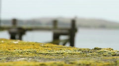 Mossy Dock (2 takes) Stock Footage