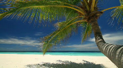 Diagonal dolly beach with palmtree Stock Footage