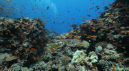 Diving along beautiful reef Stock Footage