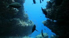 Diving through canyon with many fish Stock Footage