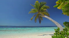 Lonely palmtree on beach Stock Footage