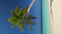 One single palmtree on a beach vertical Stock Footage