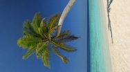 Stock Video Footage of one single palmtree on a beach vertical