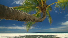 Palmtree dolly shot right to left Stock Footage