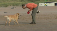 WS, Handheld, Male playing and running with dog on the beach Stock Footage