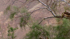 Green Brunches in the desert 1.  Stock Footage