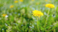 Flowers in grass Stock Footage
