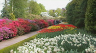 Holland Tulips Stock Footage