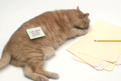 Cat with sticky note THE BUCK STOPS HERE - NTSC Stock Footage