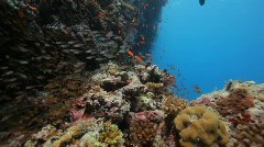 Many reef fish Stock Footage