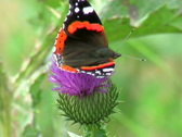 The  butterfly on a flower Stock Footage