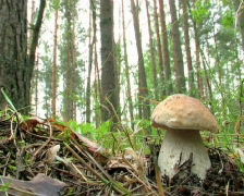 Cep Stock Footage