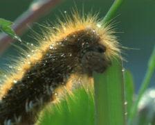 Hungry caterpillar Stock Footage