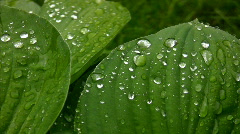rain drops on green foliage in park - stock footage