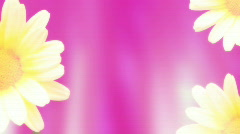 Pinks and Flowers Looping Background - stock footage