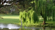 Beautiful Golf Course Community Stock Footage