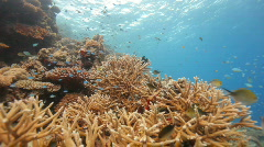 Nice coral reef towards surface Stock Footage