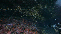 Underwater photographer in shoal of fish Stock Footage