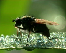 Macro, fly Stock Footage