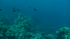 The coral reef Stock Footage