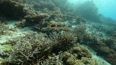 Corals Stock Footage