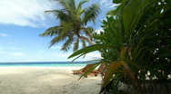 Palmbeach with beds dolly Stock Footage