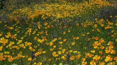 Breezy Wildflower Fields Stock Footage