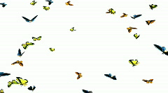 Looping Butterflies Slow Swarm Animation 1 - stock footage