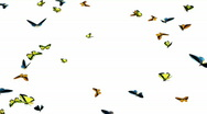 Stock Video Footage of Looping Butterflies Slow Swarm Animation 1
