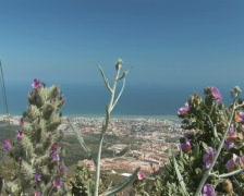 PAL: Flowers & Benalmadena Stock Footage
