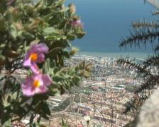 PAL: flowers and Benalmadena Stock Footage