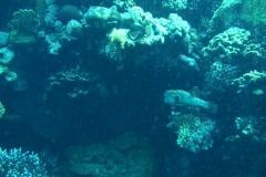 Porcupinefish Stock Footage