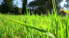 Green grass in a meadow - stock footage
