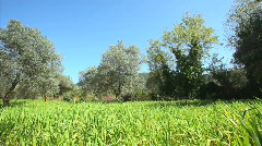 Grass Meadow - stock footage