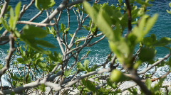 Small Fig tree - stock footage