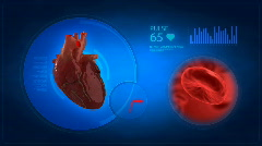Human heart medical display with blood window Stock Footage