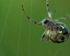 spider spins a web Stock Footage