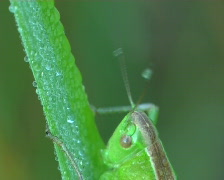 grasshopper washes - stock footage