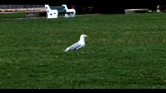 Bird in Empty Park - stock footage