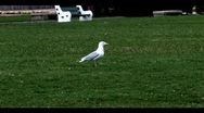 Bird in Empty Park Stock Footage