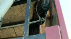 Racing horse in the truck before the race Stock Footage