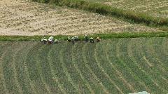 Farmers on Field (South America) Stock Footage